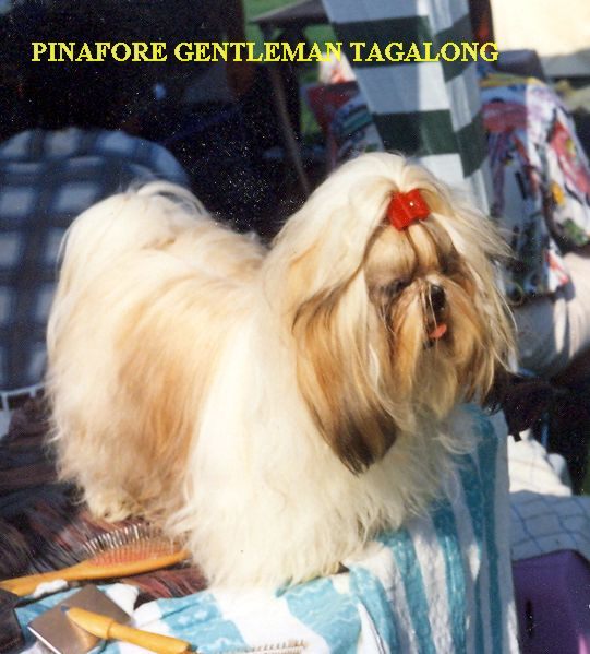 Pinafore Gentleman Tagalong.jpg